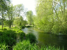 Picture: /blog-files/blog/w288/bourne-rivulet.jpg