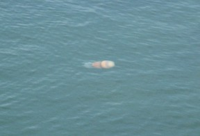 Picture: /blog-files/blog/w288/giant-jellyfish-devon.jpg
